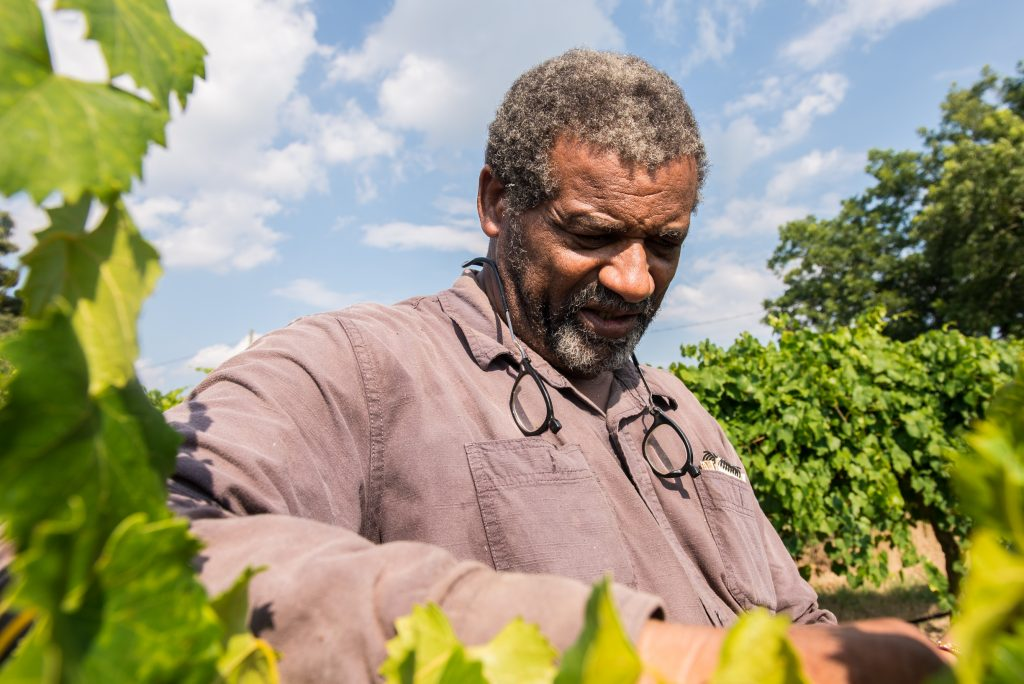 Black Farmers' Network | Dr. Veronica Womack at Jibb's Vineyard in Byromville, GA.